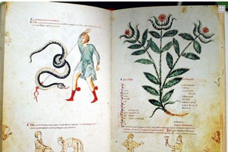 Codice della Scuola Medica Salernitana